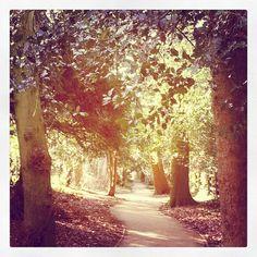 Castle Park, Frodsham.