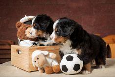 Toys, Animals, Animales, Animaux, Animal, Games, Animais, Toy, Beanie Boos