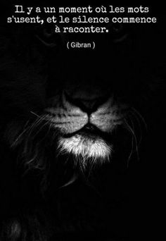 Cats black and white photography lion super Ideas Beautiful Creatures, Animals Beautiful, Cute Animals, Beautiful Lion, Animals Black And White, Black Lion, Black And White Lion, Urban Nature, Lion Art
