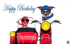Happy Birthday Dog Images, Messages, Pics, Wishes