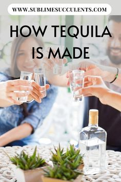 Tequila is made from a succulent plant called Agave tequilana. On this pin, you'll know the whole process on how tequila is made. Check it out! Flowering Succulents, Cacti And Succulents, Planting Succulents, Succulent Planter Diy, Succulent Care, Succulent Species, Best Tequila, Whiskey Distillery, Cactus Care