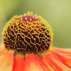 Macro flower/flower photography. Photo by Courtney Thompson