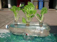 Hydroponic Lettuce Garden From Plastic Bottles (Grow