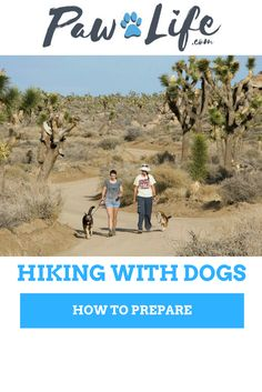 Dog owners will readily agree that our dogs are not just pets; they are an important part of the family. This means that it's important to find activities that the whole family can enjoy – not just the two legged members