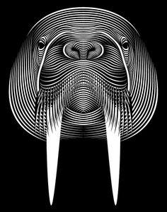 Patrick Seymour - Géométrie - Eléphant de mer - Directeur artistique et illustrateur, le québécois explore le monde merveilleux des lignes et des courbes.