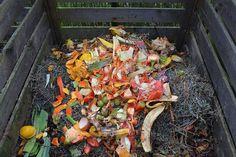 Zachwyca nas ten niezmienny obieg materii w przyrodzie. To co nam Matka Ziemia dała w postaci warzyw, owoców, kwiatów, Jej oddajemy. Bakterie, ślimaki, dżdżownice przerabiają resztki organiczne na żyzną, próchniczą glebę, by ta dała nam kolejne plony.