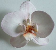 Sugarpaste moth orchid with tutorial