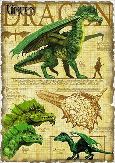 Green Dragon --from A Practical Guide to Dragons
