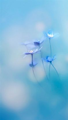 Simple Little Flowers Bokeh Blury iPhone 8 wallpaper Blue Flower Wallpaper, View Wallpaper, Colorful Wallpaper, Nature Wallpaper, Wallpaper Backgrounds, Iphone Wallpaper, Bokeh Wallpaper, Screen Wallpaper, Wallpaper Quotes