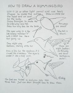 Worksheet from how to draw a humming bird. An easy drawing lesson you can read it at my blog: http://drawinglessonsfortheyoungartist.blogspot.com/2012/07/how-to-draw-hummingbird-lesson-with.html