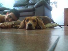 olha como estou linda! Agora eu vou descançar um pouquinho aqui com o Victor, tô muito cansada brinquei d+ Dogs, Animals, Animales, Animaux, Pet Dogs, Doggies, Animal, Dog, Animais