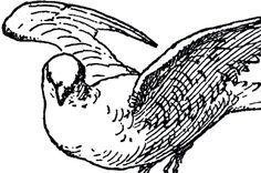 Free Dove Line Art!