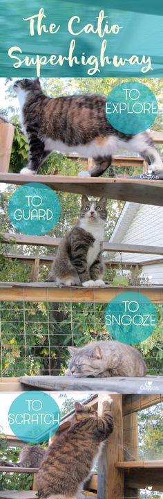 The Catio Super Highway: Let's go up! via @chirpycats