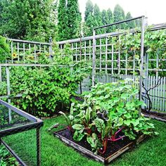 Clean and attractive looking veggie garden-good bhg article on landscaping design principles