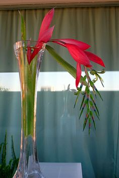 The Garden Geeks Plant of the Day: Queen's Tears (Billbergia nutans) epiphyte/houseplant Zone 11-14 To read more or find a supplier