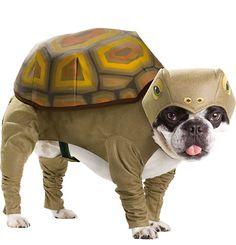 Dog In Tortoise Halloween Costume