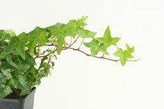 Plantas para la sombra