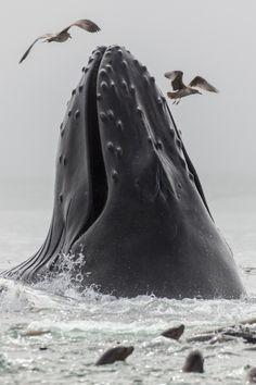 Ocean Life ohja...ja, ja...gib alles...mach.. gib alles...weiter...oooh was soll denn das?