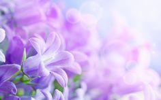лепестки, hd, листки, цветы, красивые 1920x1200