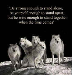 wolf pack quotes - Google Search