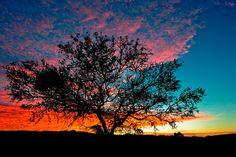 sundown tree. I want to paint this.