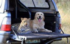 animal friendship029