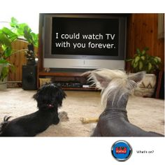 No comment. Gintama with funny pets with funny pets. Tv Funny, Funny Dogs, Funny Animals, Dog Separation Anxiety, Dog Anxiety, Pet Insurance For Dogs, All Breeds Of Dogs, Pet Costumes, Dog Boarding