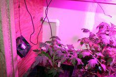 How to make a grow box controller - The Cheap Vegetable Gardener