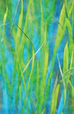 In the Reeds - ©Anne Staub (via Society6)