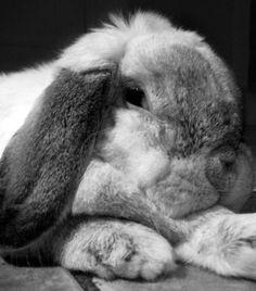 cute bunnies 13 Daily Awww: Born to be cute: Bunnies (32 photos)