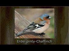 Madárdalok Magyarországról - Középhegységi lombos és fenyőerdők madarai - YouTube