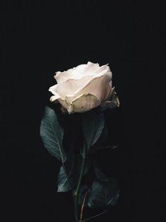 Imagen de rose, flowers, and white