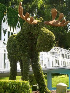 Topiary Moose a moose AND Disney!!!