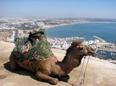 Agadir Morocco - you have to pay to have your picture with the camel (whom i thought was a statue at first) Agadir Morocco, Marrakech, Hassan 2, All Inclusive Vacation Packages, Fun Vacations, Road Trip, Africa Destinations, Shore Excursions, Beach Town