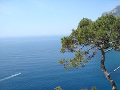A tree and the sea - Capri