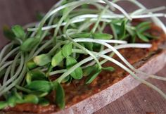 sunflower sprouts and olive tapanade