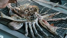 facehugger - Google Search