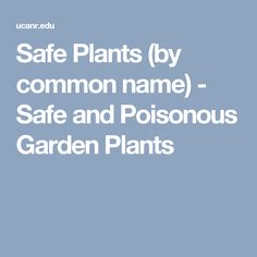 Safe Plants (by common name) - Safe and Poisonous Garden Plants