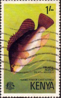 Postage Stamps Kenya 1977 Game Fish of East Africa Nile mouthbrooder  SG 72 Fine Used Scott 69 Other Kenya Stamps HERE