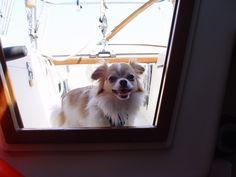 Permission To Come Aboard Captain! Ottawa River - Canada