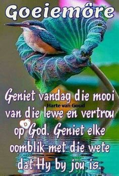 Good Morning Good Night, Good Morning Wishes, Morning Messages, Day Wishes, Lekker Dag, Goeie Nag, Goeie More, Afrikaans Quotes, Special Quotes