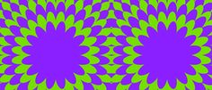 curved contour swatches for Illustrator CC CS3 CS5 etc purple green