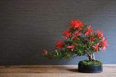 いいね!119件、コメント2件 ― 琳葉盆栽 りんはぼんさい rinha bonsaiさん(@rinha_bonsai)のInstagramアカウント: 「#さつき盆栽 #さつき #bonsaiwork #bonsai #kokedama #moss #modern #interior #green #flower #苔玉…」