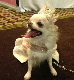 Our 2014 Street Style Dog Pageant Is LIVE! Go here to enter your pup to win great prizes from Oscar Newman, Fetch Dog Fashions, and Bling Bling Poochies! http://streetstyledogs.com/street-style-dogs-pageant/
