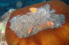 Taveuni Dive - Rainbow Reef Diving