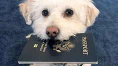Planning your trip with a pooch