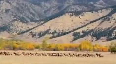 Large Western Ranches for Sale