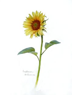 Sunflower 1 is SOLD