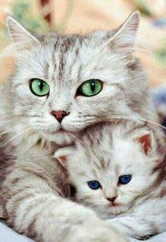 Mom cat and baby kitten  | cats | | kittens | #cats #cutecats   https://biopop.com/ #SoCuteBabies