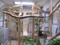 marmoset cage - Bing Images Monkey Cage, Marmoset Monkey, Animal Habitats, Cattery, Lemur, Exotic Pets, Animals Beautiful, Ladder Decor, Bing Images